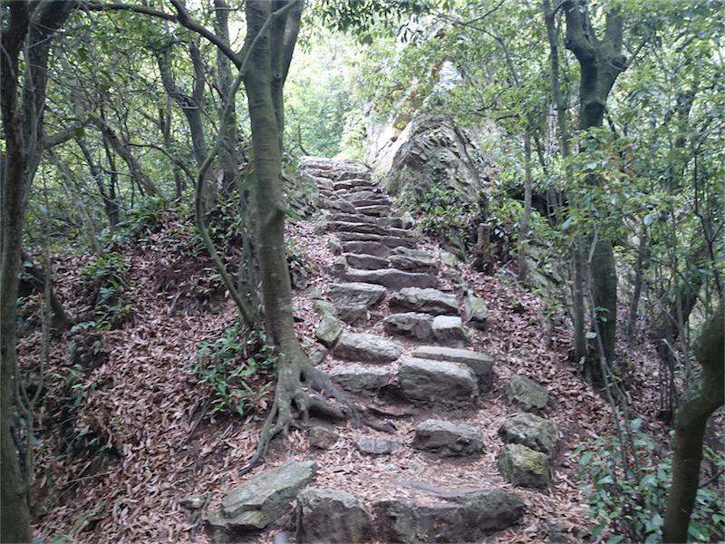 自然見溢れるステキな階段