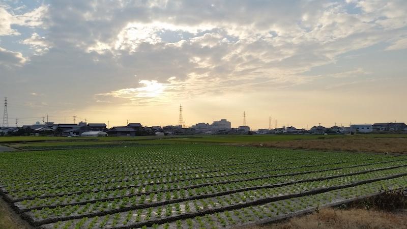 田舎の夕方の風景
