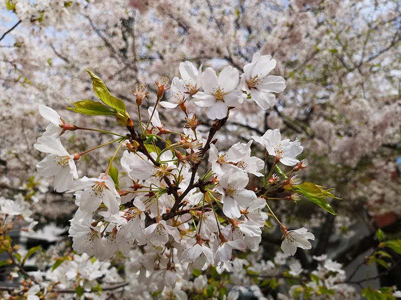 Huawei P20 Proで撮影した花